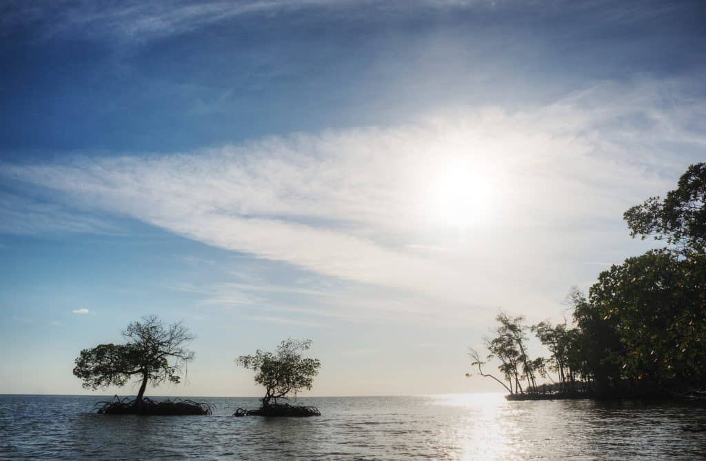 Two small islands house trees in the Ten Thousand Islands, as seen from one of the best Naples boat tours.