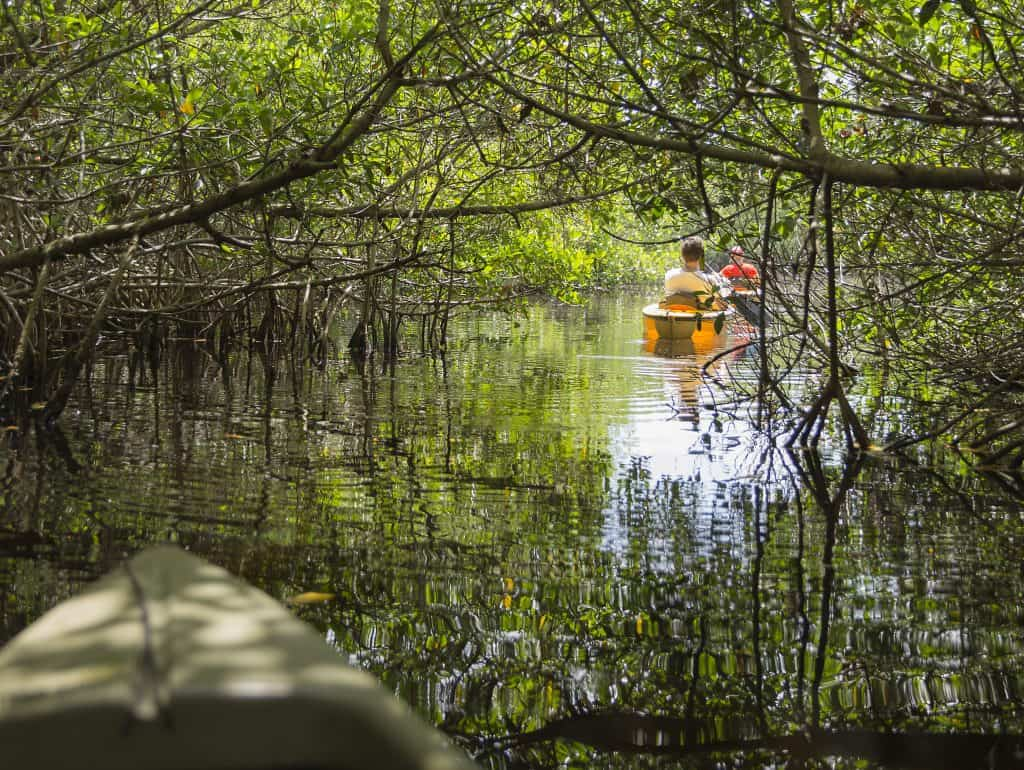 Kayakers wind through the mangrove forests on one of the best Naples boat trips.