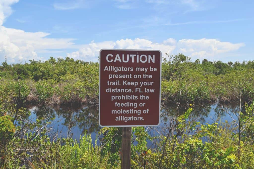 A sign warns drivers not to touch or feed the gators.
