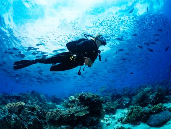 person scuba diving in the Florida keys