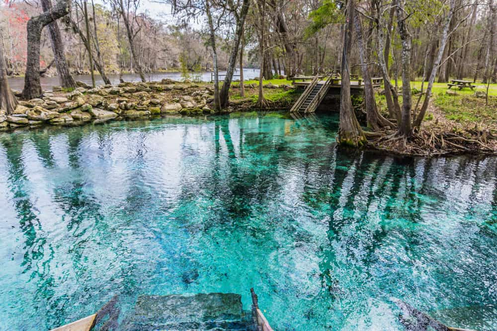Located just 29 miles away from Orland, Blue Springs State Park has one of the biggest manatee conservation efforts in Florida, with numbers getting up to 485!