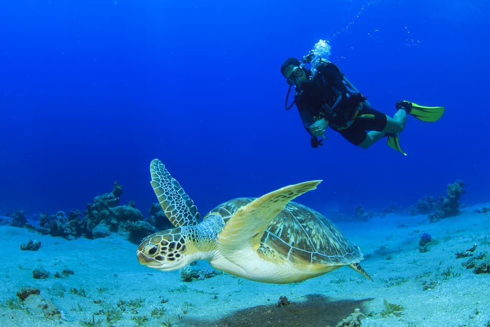 Key West is a great place to see some sea turtles when scuba diving in Florida!