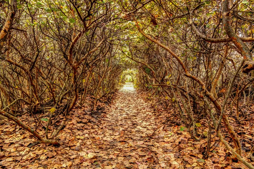 tree tunnel at blowing rocks in florida