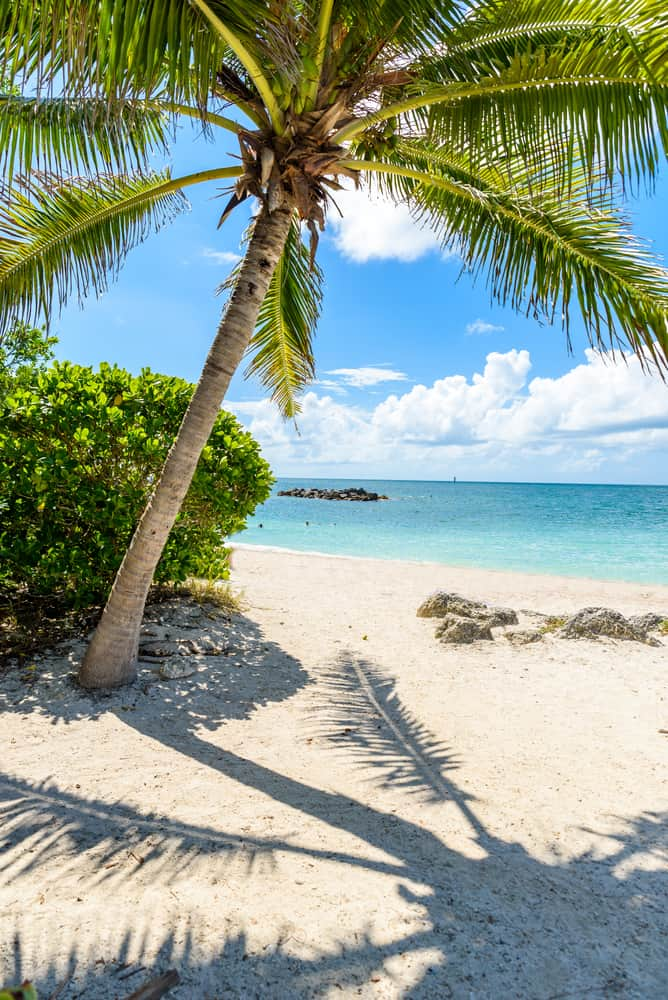 The white coral sand beach at Fort Zachery Park in Key West with a palm tree and shadow overlooking the rocks off the coast