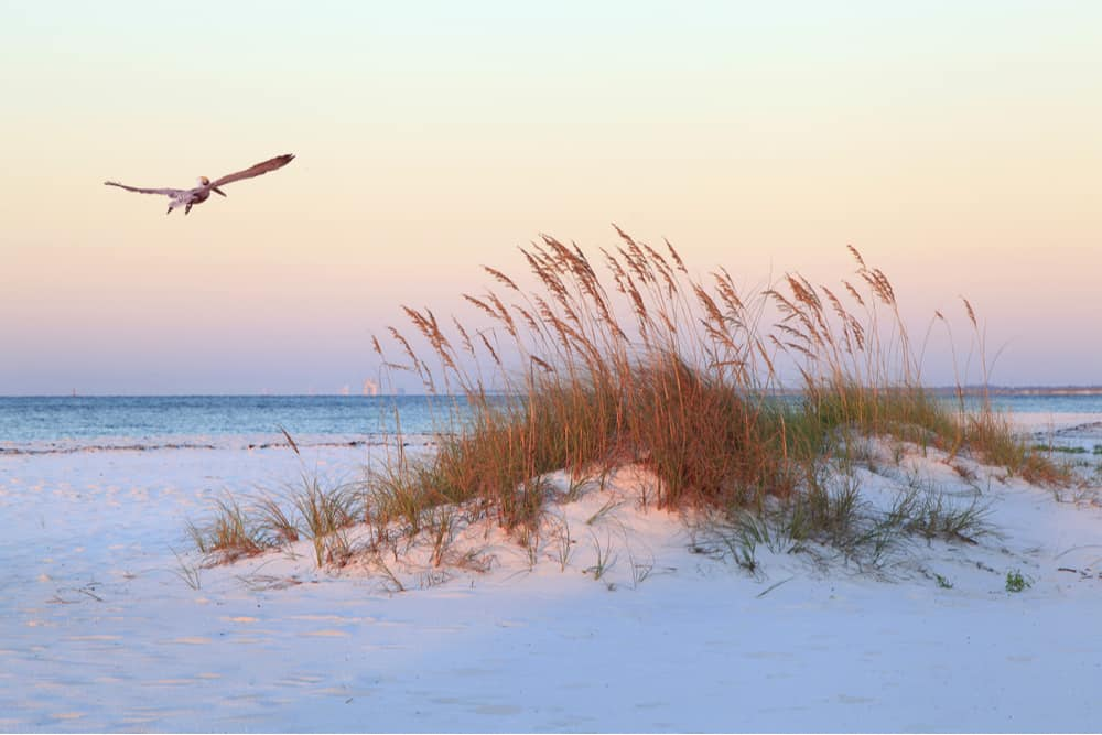 PHOTO OF SEAGULL FLYING OVER SAND DUNES AT OPAL BEACH IN PENSACOLA