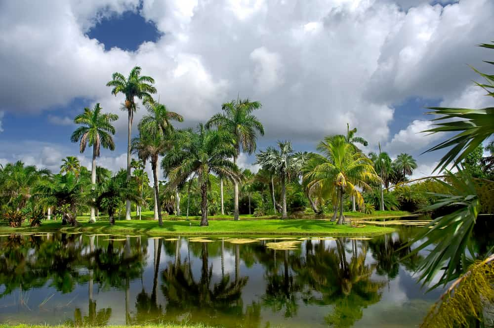 Palm trees at Fairchild Tropical Botanic Garden, one of the largest botanical gardens in Florida.