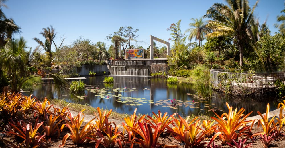 A pond with lilies at Naples Botanical Gardens, one of the prettiest botanical gardens in Florida.