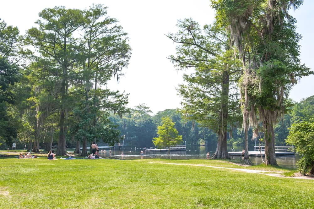 Green grassy area with trees and Wakulla Springs in the background with the swimming platforms as people sunbathe