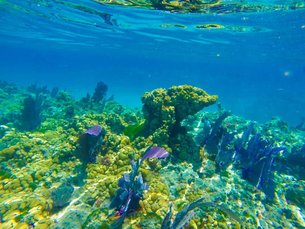 Coral reef and plants sway in the currents at the Florida Keys Marine Sanctuary in Key Largo.