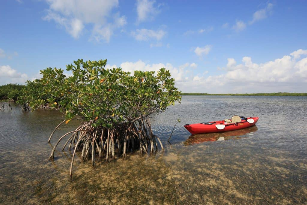 A kayak rests next to a mangrove tree, one of the best things to do in Key Largo.