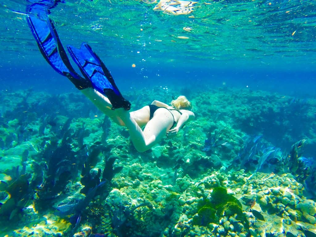 A snorkeler observes the coral reefs of Key Largo.