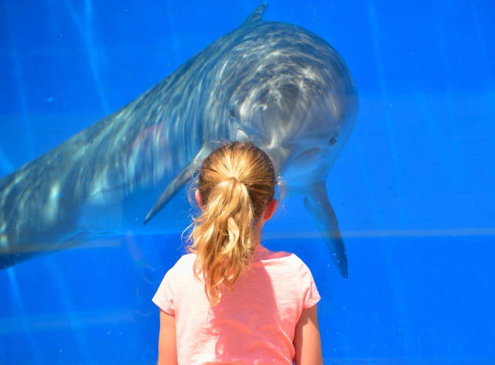 Little girl greeting a dolphin at the St. Augustine Aquarium.