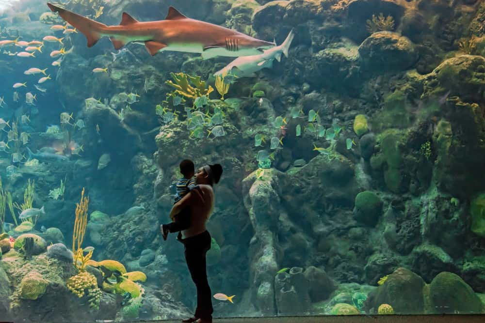 A woman and child in front of the large aquarium tank with sharks and fish swimming in front of coral reefs at The Florida Aquarium.