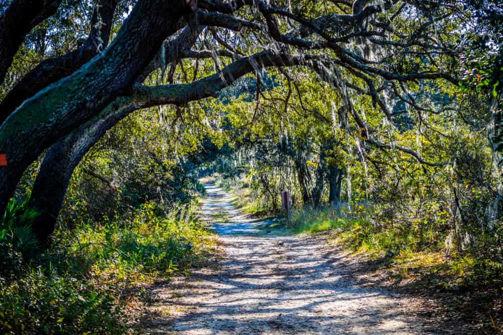 This mossy trail shows the one of the best nature hikes in Orlando.