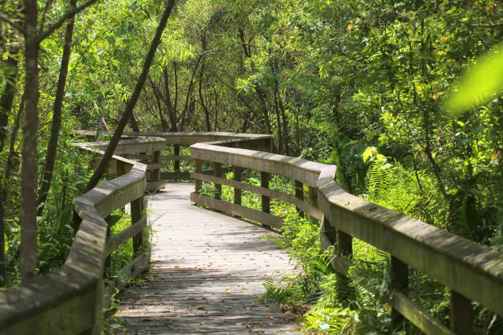 This winding boardwalk is a part of the Mead Botanical Trail, a great nature hike in Orlando.