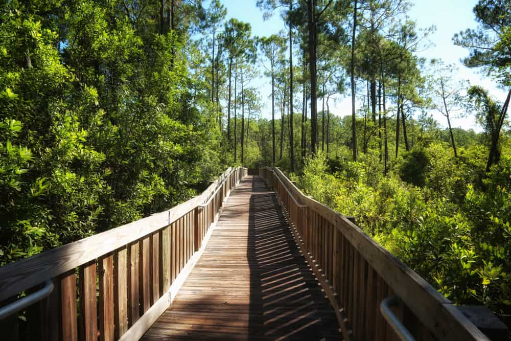 This incredible boardwalk is a part of the Tibet-Butler hiking trail in Orlando.