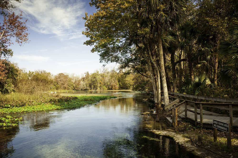 This displays the beauty of Wekiwa Springs boardwalk and how close you can get to the aquatic life.