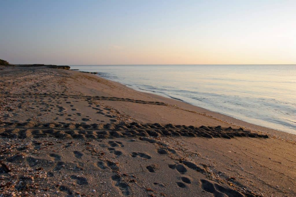 Tracks left by turtles heading back out into the Atlantic are left on the beaches of Jupiter