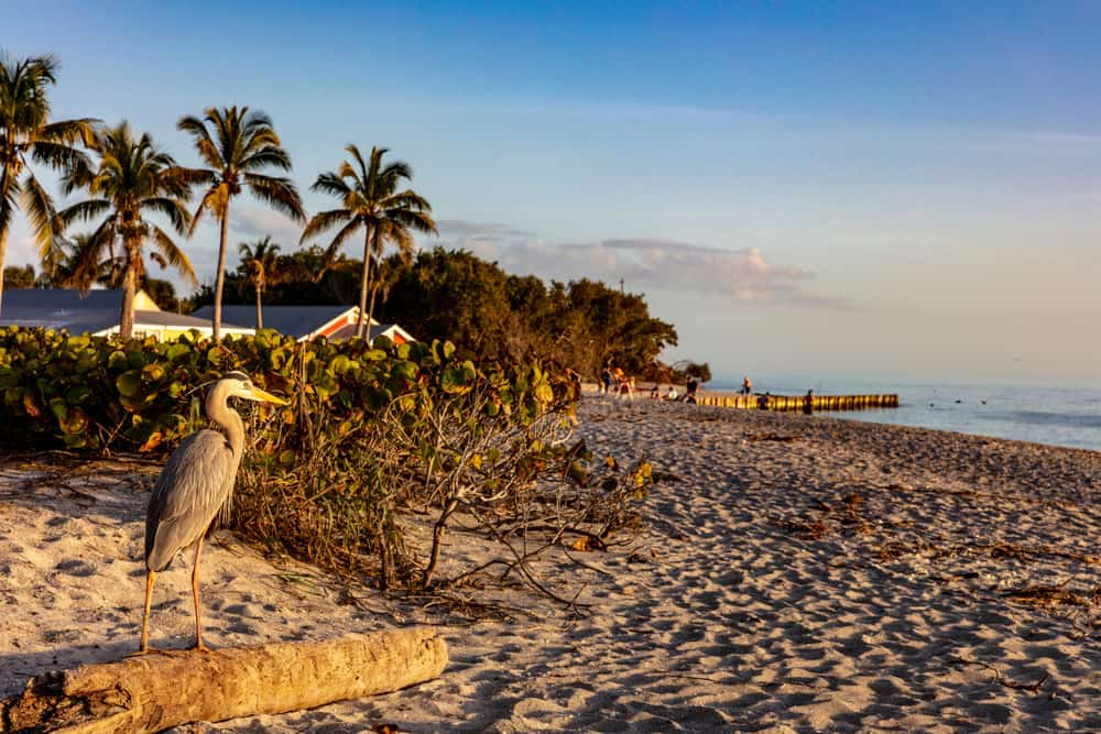 a heron watches over the sand on Blind Pass Beach