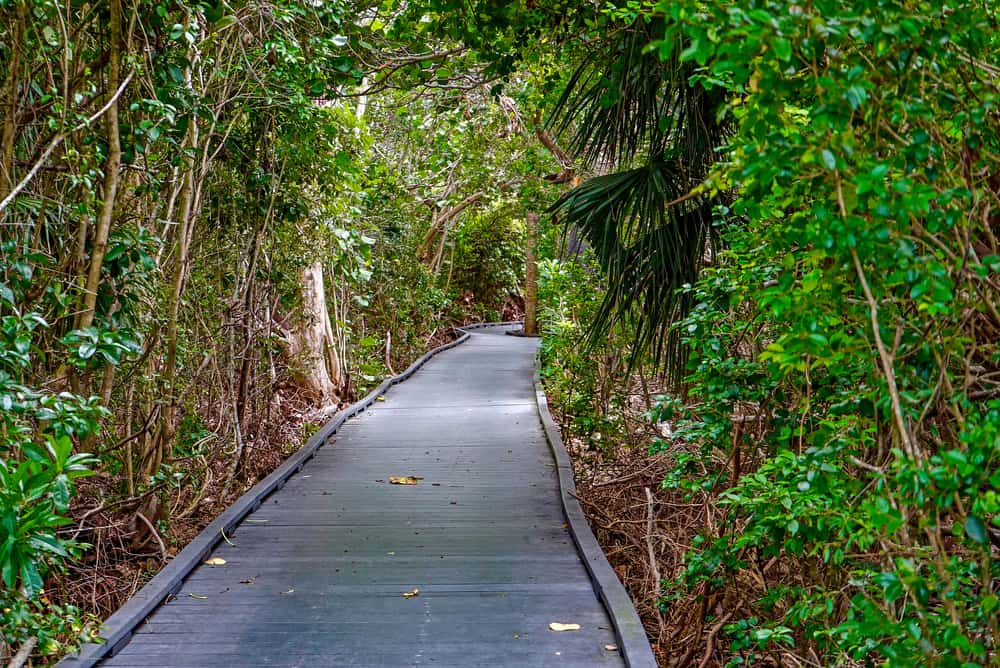 The trails of the Nature Center allow you to walk through wetlands.