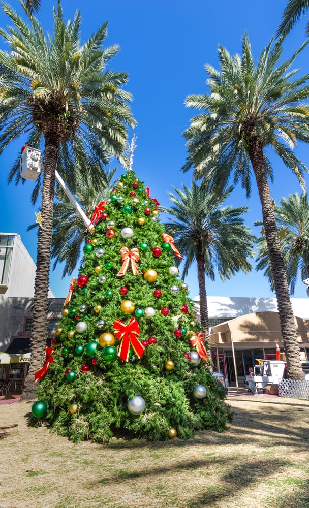 Christmas tree admits the palm trees in downtown Miami.