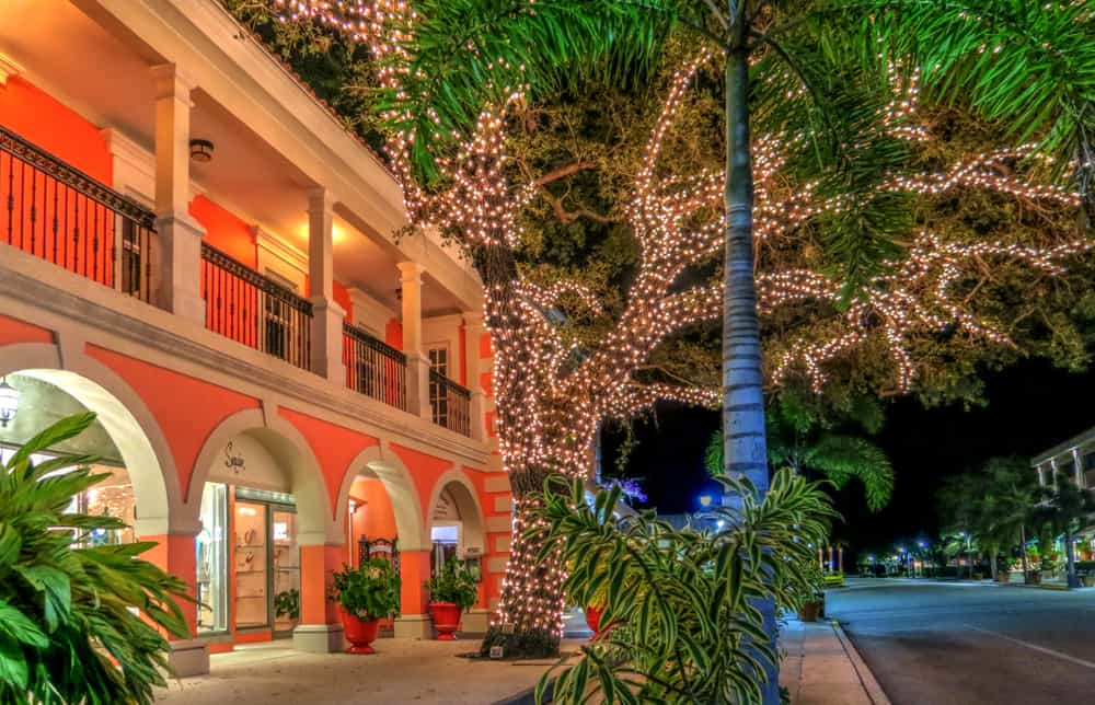 Christmas lights around a tall, old oak in Naples, Florida.