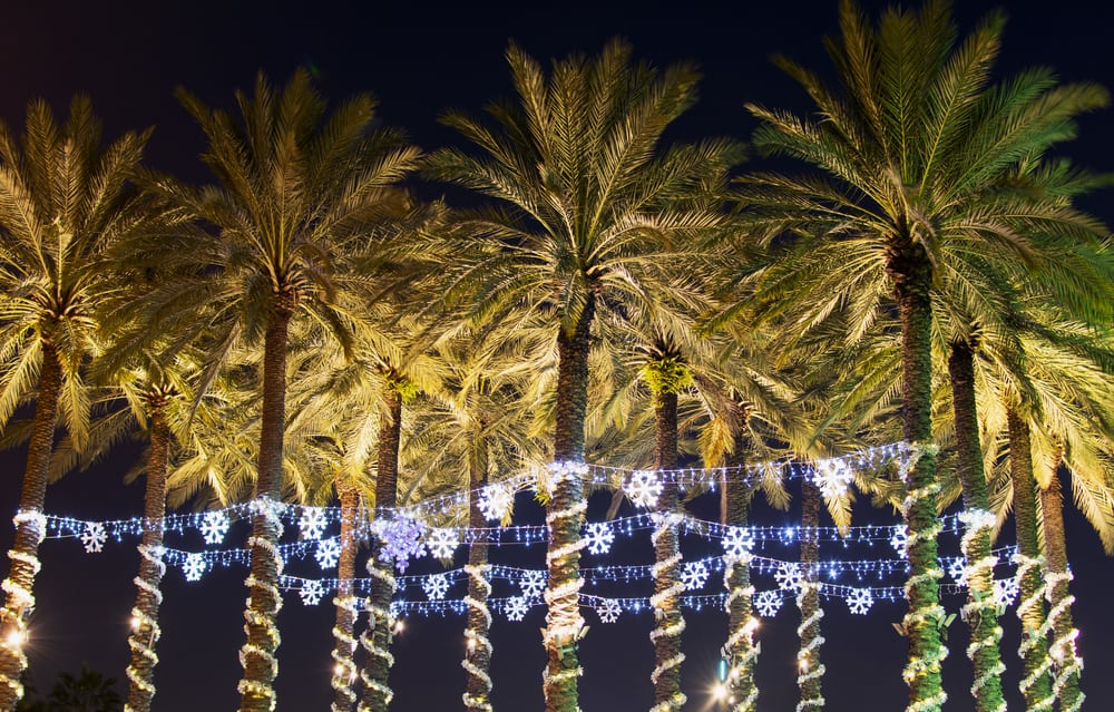 Palm trees decorated with lighted snow flakes in Tampa, one of the best Florida Christmas vacations.