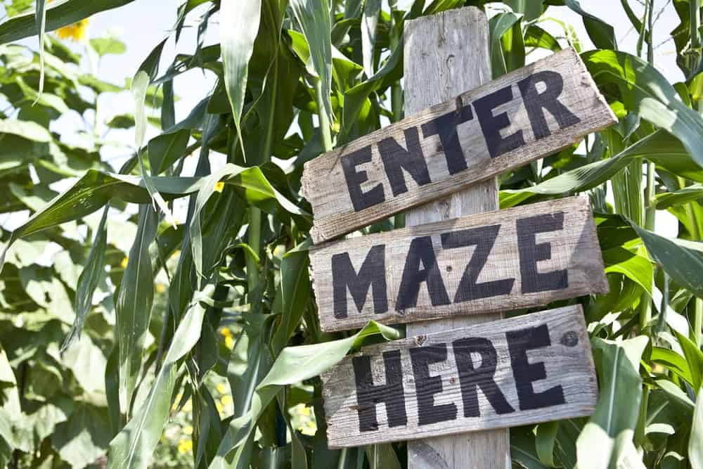 """A wooden sign posted at the entrance to a corn maze saying, """"Enter Maze Here""""."""