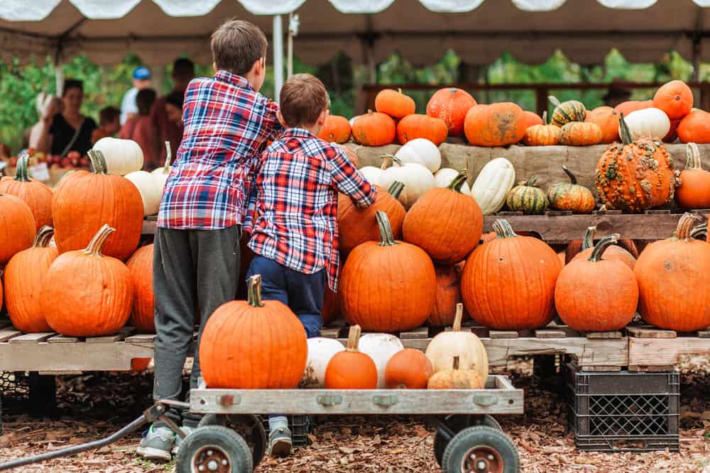 Two boys in flannel shirts picking out pumpkins at a farmer's stand, with a wagon full of pumpkins.
