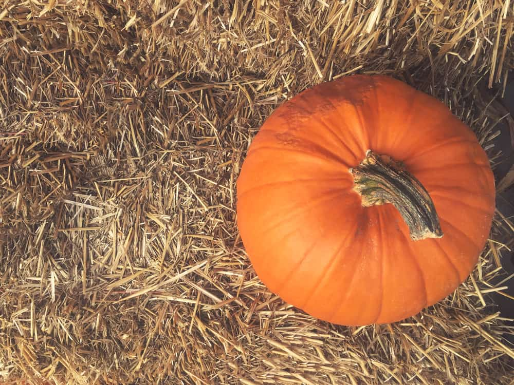 A single pumpkin resting on a bale of hay, a common sight at the best pumpkin patches in Florida.