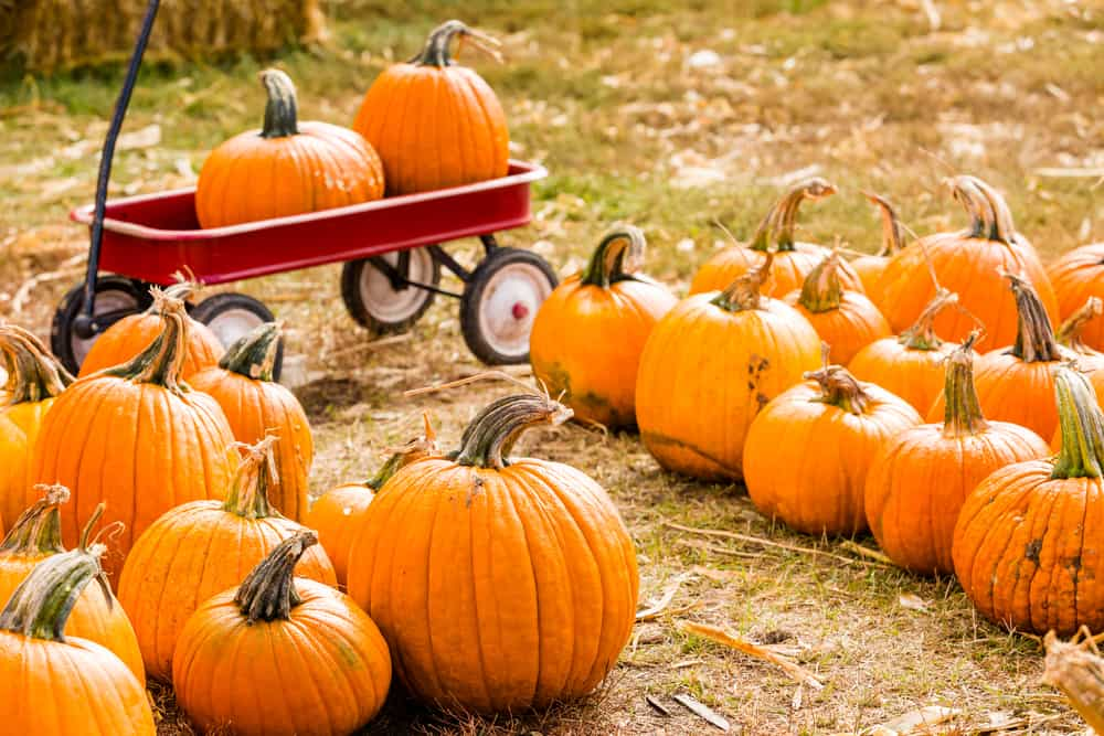 Pumpkins on the hay-strewn ground and in a small wagon.