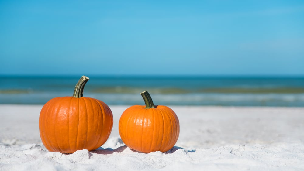Two pumpkins sitting on a Florida beach, with waves in the background.