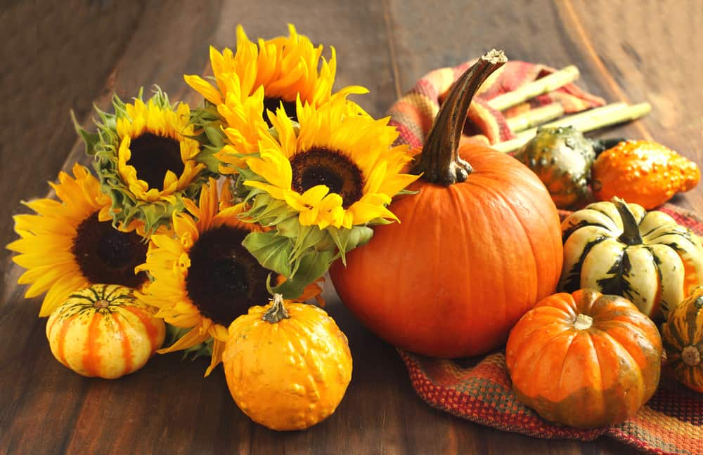 A collection of gourds and sunflowers, both of which can be picked at the best pumpkin patches in Florida.