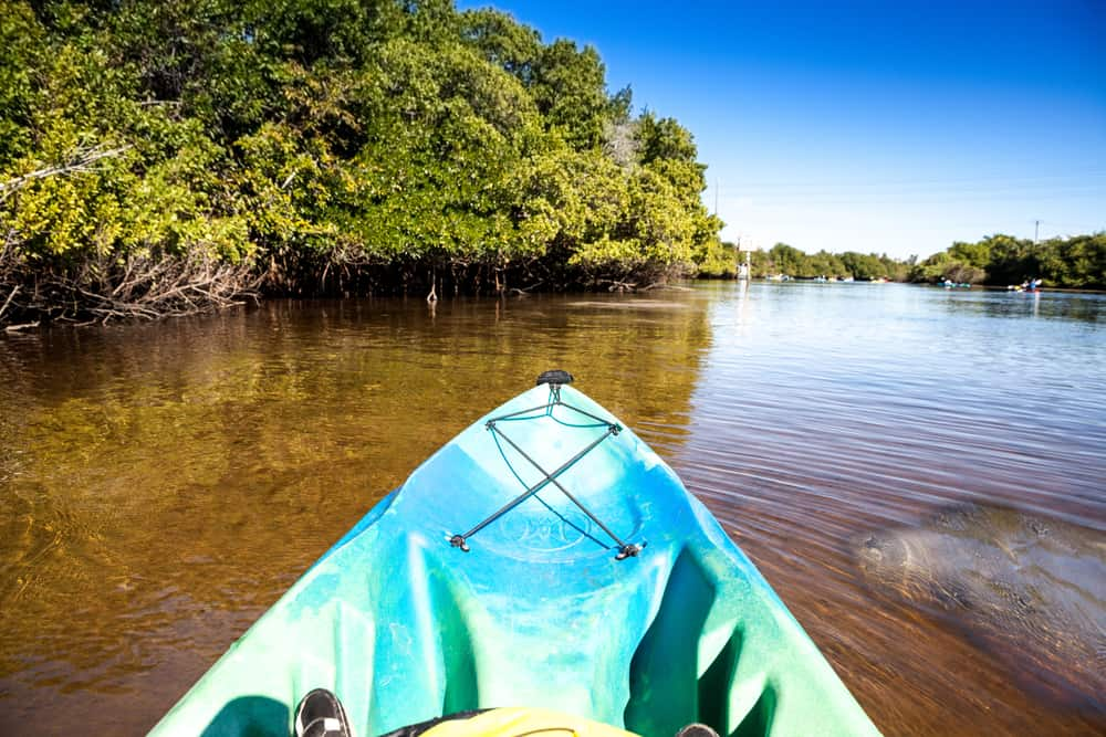 A front of a blue kayak with a manatee swimming alongside in Fort Myers