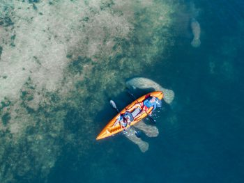 Aerial view of two people in a kayak with manatees swimming around them in an article about where to kayak with manatees in Florida