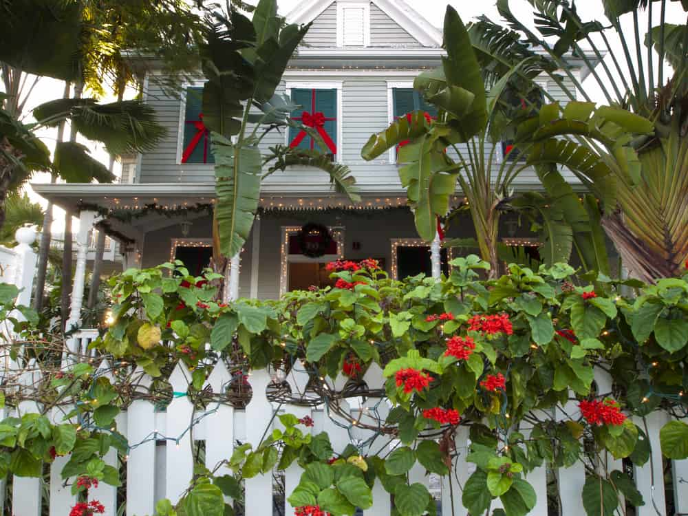 A residents yard is decorated for Christmas in Key West with red flowers, bows, and white Christmas lights.
