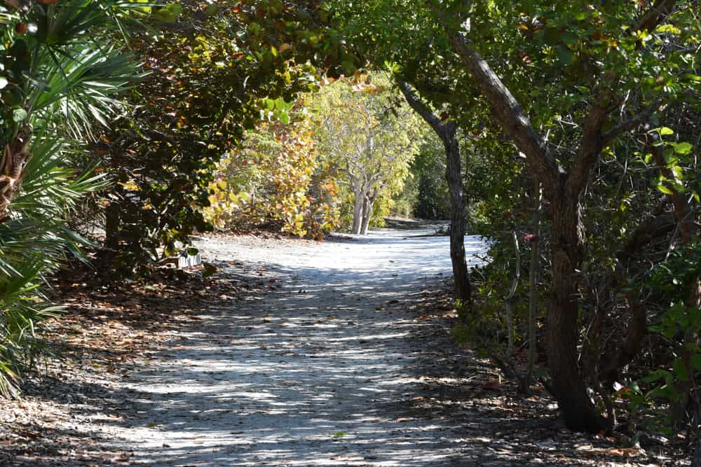 A walkway on the Leffis Key Preserve. It is a gravel walkway and there are lots of trees and shrubs on either side of it. One of the best things to do in Anna Maria Island.